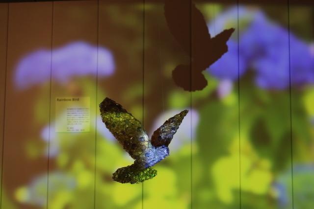 raimbowbird